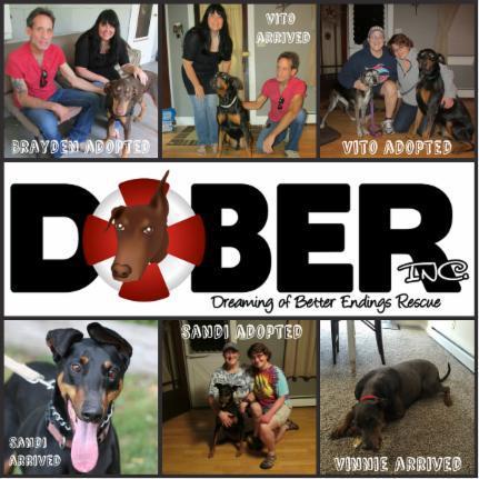 DOBER, Inc  - Home